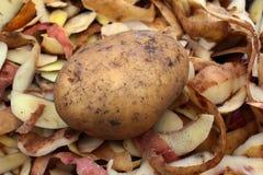 Potatis med skalningar royaltyfri bild