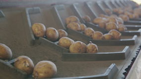 Potatis som bearbetar linjen stock video