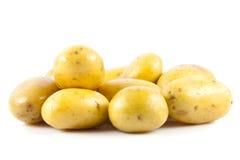 Potatis som isoleras på vit bakgrundsmat Fotografering för Bildbyråer