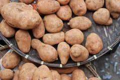 potatisar Fotografering för Bildbyråer