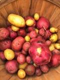 Potatisar för marknad för bonde` s i korg arkivbild