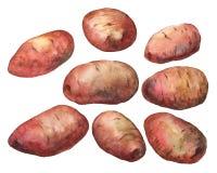 potatisar Hand dragen vattenfärgmålning Arkivbild