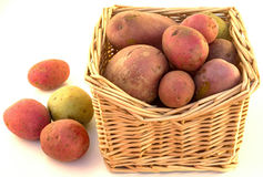 Potatisar i en korg Royaltyfri Fotografi