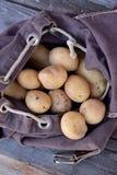 Potatisar i ryggsäck Royaltyfria Foton