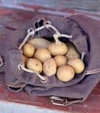 Potatisar i ryggsäck Royaltyfri Foto