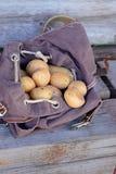 Potatisar i ryggsäck Royaltyfria Bilder