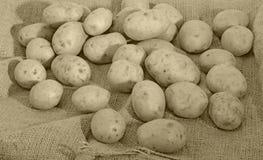 Potatisar och säck Royaltyfri Foto