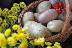 Potatisar och viburnum i en korg Begreppsmässigt skörddiagram med olika grönsaker på fältet Skörd royaltyfri foto