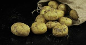 Potatisar p? svart surfase i en kanfasp?se Ny smutsig r? potatis i en h?g arkivfilmer
