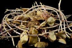 Potatisar som skära i tärningar in i avsnitt som ordnas till för att plantera royaltyfria bilder