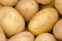Potatisbakgrund Royaltyfri Foto