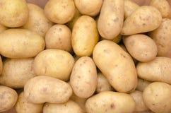 Potatisbakgrund Royaltyfria Bilder