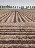 Potatisfält Arkivfoton