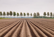 Potatisfält Arkivbilder