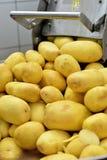 Potatisskalningsmaskin Fotografering för Bildbyråer