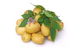 Potato 04 Royalty Free Stock Photography