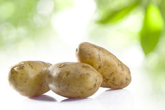 Free Potato Stock Photo - 12039410
