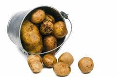 Potato. In pail isolated on white royalty free stock photos