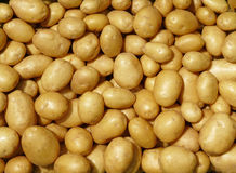 Potato. Tubers of a new crop Stock Photo
