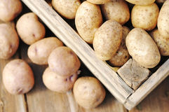 Potato Stock Image