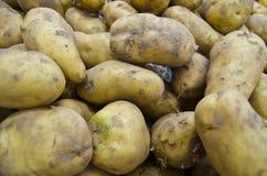 Potato. Pile fresh potatoes waiting sold Royalty Free Stock Photos