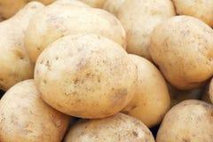 Potato. The close-up of potato Stock Image