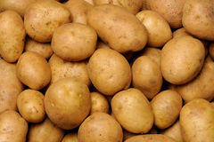 Potato. Knot of potato - a full frame Royalty Free Stock Photos