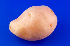 Potato. Isolated on blue background Royalty Free Stock Images