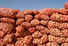 Potato. Heap of potato packs at farm or market royalty free stock images