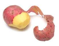 Potato 5 Stock Image