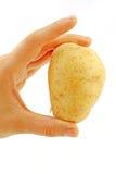 Potato Stock Photos