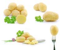 Potato. Fresh potato collection, on white background stock photography