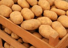 Potato. In the wood box stock photography