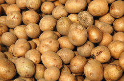Potato. Produce - Potato stock photo