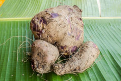 Potato of Asia natural. Potato Asia is raw on banana leaf Royalty Free Stock Photos
