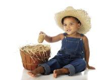 Potato Baby Royalty Free Stock Photography