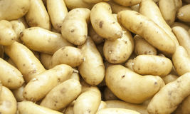 Potato Background Royalty Free Stock Images