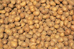 Potato background Royalty Free Stock Image