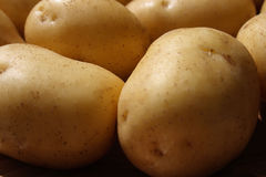 Potato background Stock Images