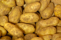 Potato background. Fresh organic young potatoes background Stock Images