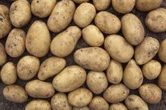 Potato background Royalty Free Stock Photography