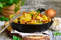 Potato baked with chanterelles,onion and dried herbs. Royalty Free Stock Photography