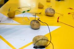 Potato battery STEM activity with potatoes, lemons, alligator cl royalty free stock image
