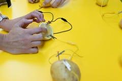 Potato battery STEM activity with potatoes, lemons, alligator cl royalty free stock images
