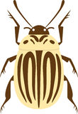 Potato beetle Stock Image