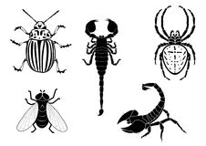 Potato beetle, fly, scorpion and spider Royalty Free Stock Image
