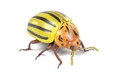 Potato beetle Stock Photos