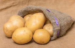 Potato. In a burlap sack royalty free stock image