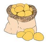Potato in a canvas bag. Hand drawn vector sketch. Clip art illustration for harvest festival stock photo