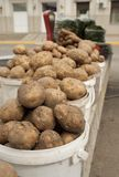 Potato and carrot Stock Images